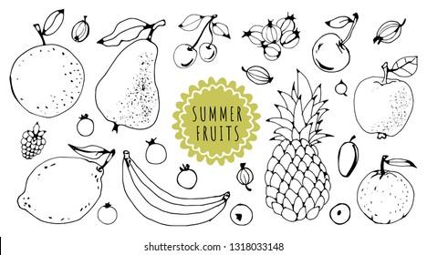 Summer fruits hand drawn set. Line art. Isolated on white background