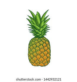 summer fruits pineapple fresh and healthy vector illustration on white background isolated flat design