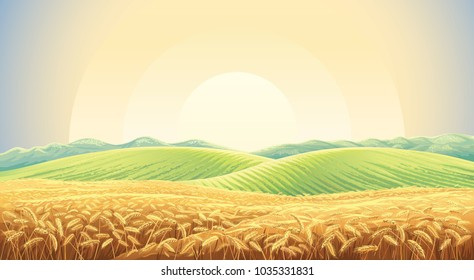 Summer landscape with a field of ripe wheat, and hills and dales in the background