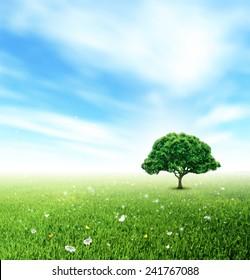 Summer Landscape With Field, Sky, Tree, Grass, Flower And Butterflies