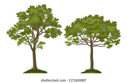 Summer Landscapes, Trees Pine and Maple on the Green Grass, Isolated on White Background. Vector