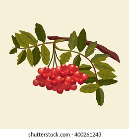 Summer leaves and berries red mountain ash. Rowan or mountain-ash tree branch with berries. Vector illustration. Vector ash-berry.