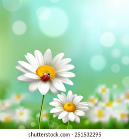 Summer meadow background with realistic daisy flower and ladybug vector illustration