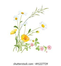 Summer meadow flowers. Daisy, Clover and Calendula