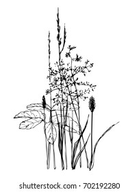 Summer meadow grass. Vector ink hand drawn silhouettes of ornamental grass and leaves. Matgrass, silver hairgrass, wheat grass and aegopodium