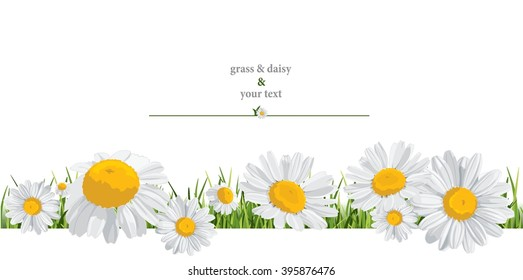 summer print with daisies