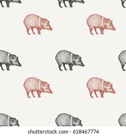 Summer seamless pattern with animals South America. Wild pig. Black and red peccary on pastel background. Hand drawing of wildlife. Vector illustration art.  Vintage design for fabrics, paper