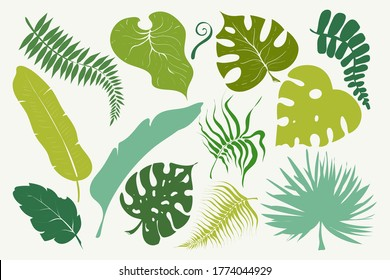 Summer set of green tropical leaves palm, trees elements. Exotic jungle leaf. Vector stock illustration. Design for cards, web, natural product ets.