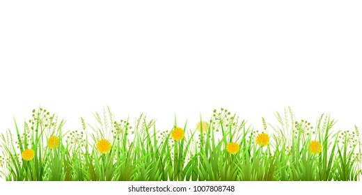 Summer or Spring Green Grass isolated on white background. Long format. Yellow dandelions. Vector illustration