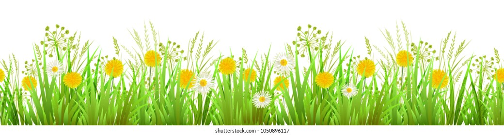 Summer or Spring Green Grass isolated on white background. Long format Seamless Pattern. Border. Yellow dandelions and chamomilie. Vector illustration
