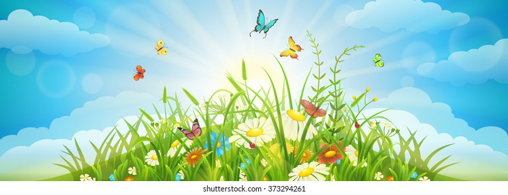 Summer and spring meadow background with grass, flowers, butterflies and sky