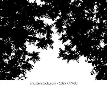 Summer trees, leaves, grunge floral card, frame. Vector illustration.