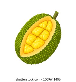 Summer tropical fruits for healthy lifestyle. Jackfruit. Vector illustration cartoon flat icon isolated on white.