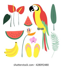 Summer tropical graphic elements. Parrot bird. Jungle flowers. Jungle animal. Palm leaves, orchid, strelitzia, anthurium. Watermelon, banana fruit. Isolated vector illustrations. Flat design.