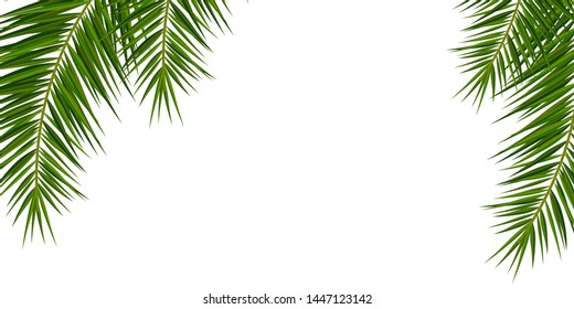 Summer Tropical palm leaves. Exotic palms tree. Floral Background