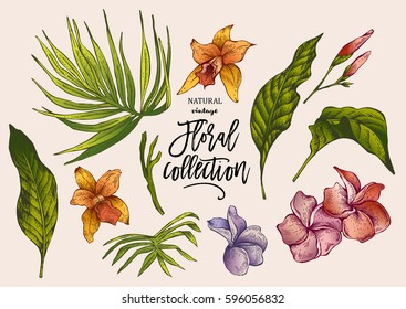 Summer Vector Tropical Vintage Floral Collection with Exotic flowers, Set of botanical natural orchid Illustration
