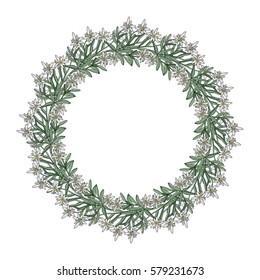 Summer wreath with edelweiss flowers. Vector illustration
