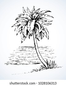 Summertime exotic scenic view with space for text on white sky backdrop. High lush coconut palmtree plant on bay. Freehand ink hand drawn picture sketchy in art retro scribble etch style pen on paper