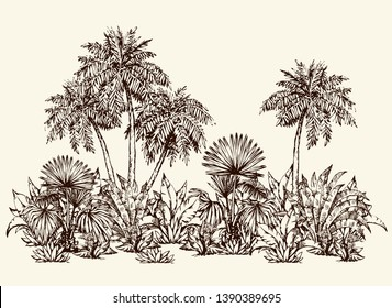 Summertime hot sunny Hawaii beach scenic view isolated on space for text on white sky backdrop. Freehand black hand drawn Lush shrub twig sketch pattern design symbol in art doodle graphic vector styl