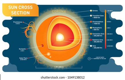 Sun cross section scientific vector illustration diagram with sun inner layers, sunspots, solar flare and prominence. Educational information poster.