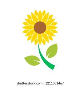sun flower icon isolated vector