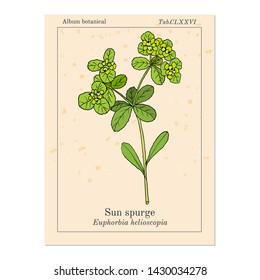 Plantar Wart Images Stock Photos Vectors Shutterstock
