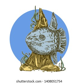 Sunfish. Color. Engraving style. Vector illustration.