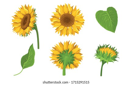 Sunflower Agricultural Plant with Yellow Petals and Seeds Vector Set