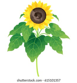 sunflower - birth flower vector illustration in watercolor paint textures