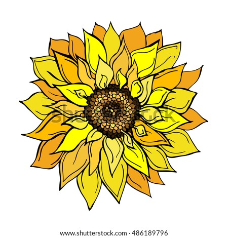 Sunflower Doodle Vector Illustration Flower Beautiful ...