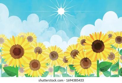 Sunflower, a flower that blooms in summer