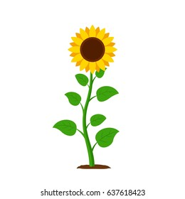 sunflower cartoon images stock photos vectors shutterstock rh shutterstock com sunflower cartoon tumblr sunflowers cartoon games