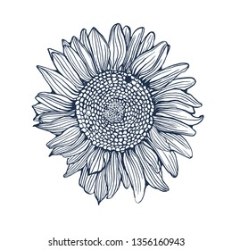 sunflower ,hand drawing ,vector illustration isolated on white background