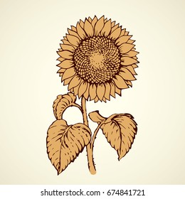 Sunflower head isolated on white backdrop. Freehand outline black ink hand drawn picture sketchy in artistic retro scribble style pen on paper. Closeup front view with space for text on light sky