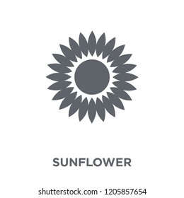 Sunflower icon. Sunflower design concept from Ecology collection. Simple element vector illustration on white background.
