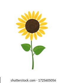 Sunflower icon isolated on white background vector illustration. Cute hand drawn flower.