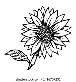 Sunflower illustration, perfect for creative logos and plant icons