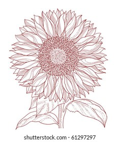 sunflower line art isolated on white background