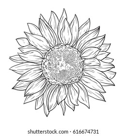 Sunflower Black And White Images Stock Photos Vectors Shutterstock