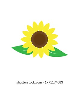 Sunflower logo icon vector illustration