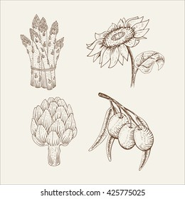 Sunflower, olive, asparagus, artichoke. Vector set of vegetables isolated on white background. Hand-drawn a sketch in woodcut style. Contour drawing with hatching. Organic food illustration.