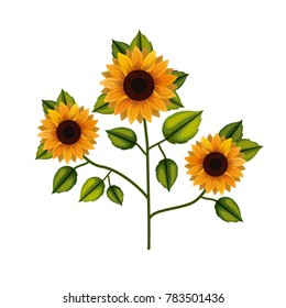 sunflower plant in white background