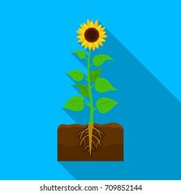 Sunflower, single icon in flat style.Sunflower vector symbol stock illustration web.