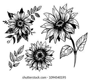 Sunflower sketch. Hand drawn illustration converted to vector. Isolated outline