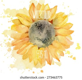 Sunflower with splashes. Vector watercolor illustration.