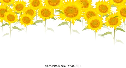 Sunflower summer flower background