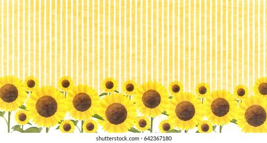 Sunflower summer flower background