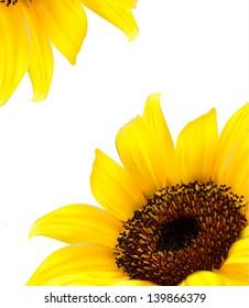 Sunflower vector background/