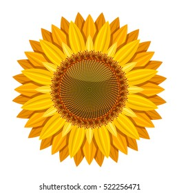 Sunflower vector isolated on white background. Yellow sun flower. Sunflower with orange petal illustration