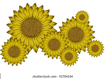 sunflower vector/illustration